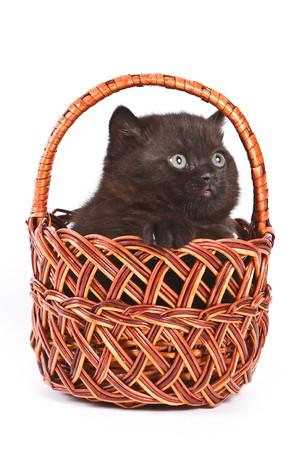 Kitten inside wooden basket on white photo
