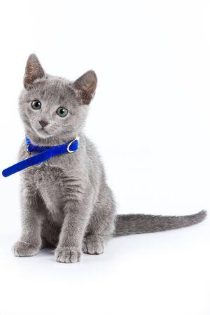 British kitten isolated on white Stock Photo