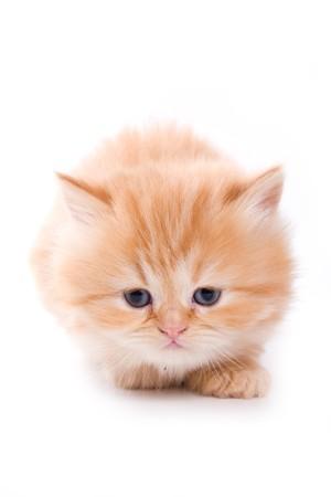 Kleine kitten op witte achtergrond  Stockfoto