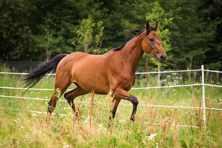 Horse walking on grass field photo