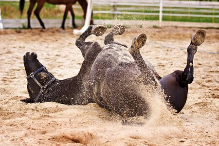 Horse laiyng in sand Stock Photo