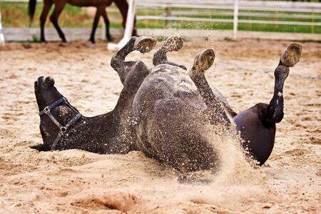 Horse laiyng in sand Standard-Bild