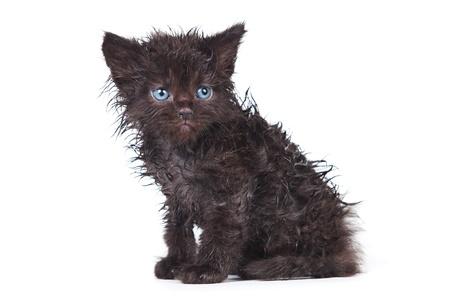 detestable: Little kitten in white background