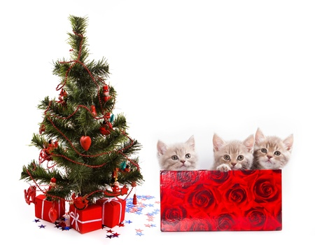 christmas pussy: Three little kittens for present