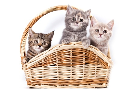 Kittens in basket on white photo