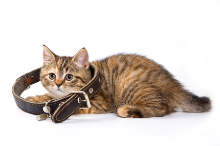 lays down: Striped kitten with large collar isolated on white