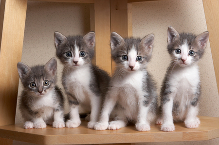 pitiful: Woesome, pitiful kittens with touching eyes  sitting and looking at the camera