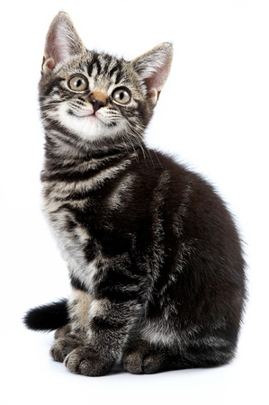 isolated on grey: Funny striped kitten sitting and smiling (isolated on white)