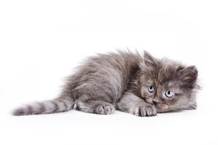 Pluizig grijs katje frightened (geïsoleerd op wit) Stockfoto