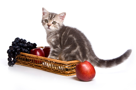 grey tabby: Grey tabby kitten British cat and fruit (isolated on white)