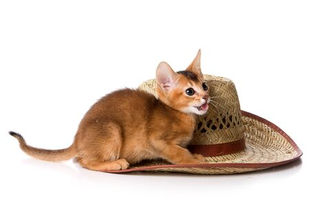 abyssinian cat: Ginger kitten Abyssinian cat and hat (isolated on white) Stock Photo