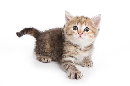 white cats: Ginger tabby kitten (isolated on white)