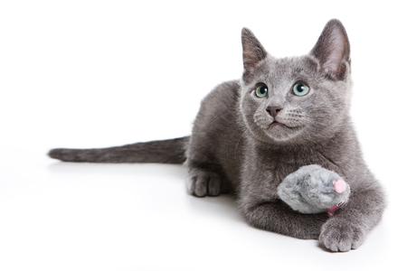 Pluizig grijs katje van een Russische blauwe kat (geïsoleerd op wit) Stockfoto