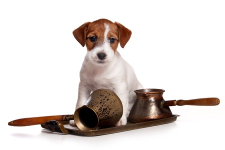 Puppy Jack Russell Terrier Dog and Pan (isolated on white) Stock Photo