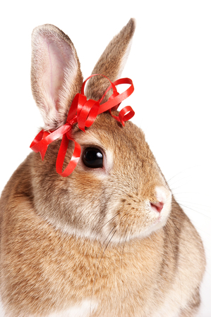 Cute red rabbit with a bow (isolated on white)