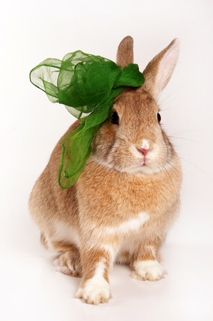 Red rabbit with a bow (isolated on white) Stock Photo
