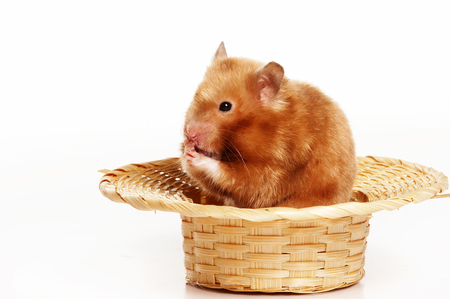 Red hamster in straw hat (isolated on white) Stock Photo - 123154786