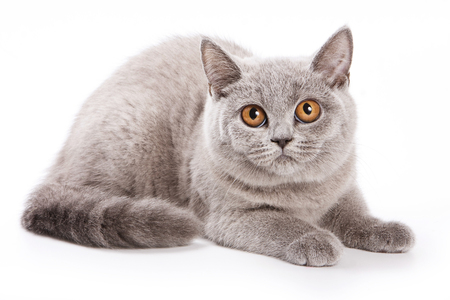 gray cat with red eyes Stock Photo
