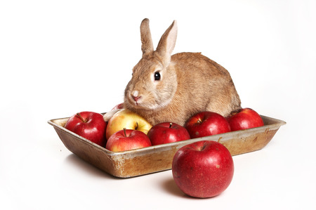 Red rabbit and apples on a tray (isolated on white)