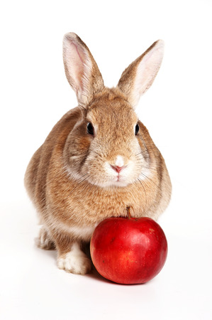 Red rabbit and apple (isolated on white) Stock Photo - 123155542