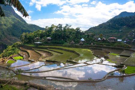 rice terraces on the hillside