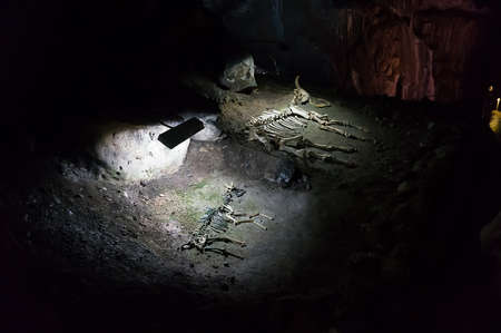 excavations: the skeletons of ancient animals on archaeological excavations in the cave. Crimea