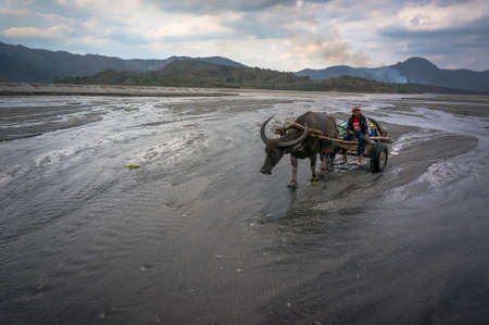 aborigine: aborigine in the mountains riding in a cart pulled by Buffalo in the mud