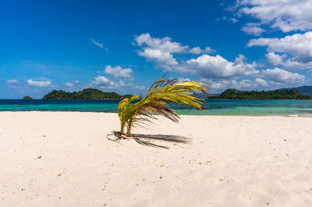 coconut seedlings: small palm tree on beach against the sea Stock Photo