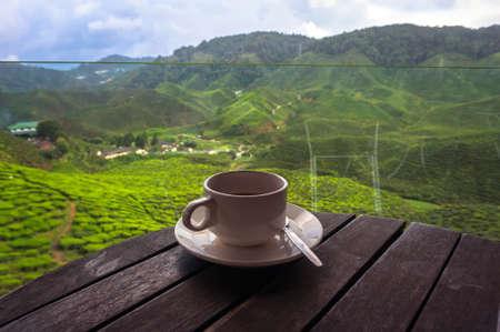 colazione: Tazza di t� nelle splendide piantagioni di t� nelle montagne di Malesia Archivio Fotografico