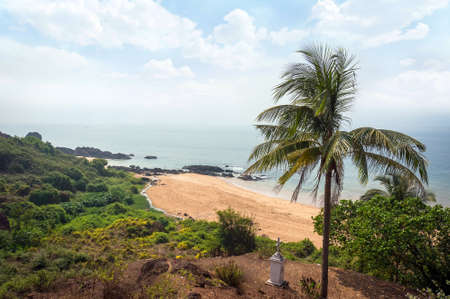 Goa beach. beach Vasco da Gama. the palm tree in the foreground against the background of the beach and sea