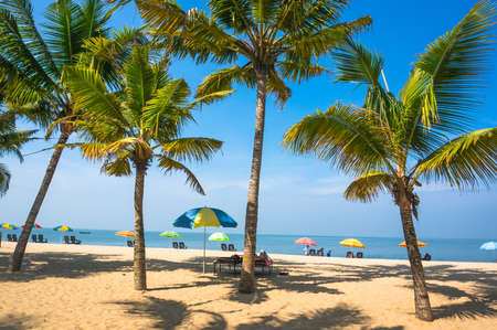 beautiful landscape with big green palm trees in the foreground to the background of tourist umbrellas and sunbeds on a beautiful exotic beach in South India Kerala.
