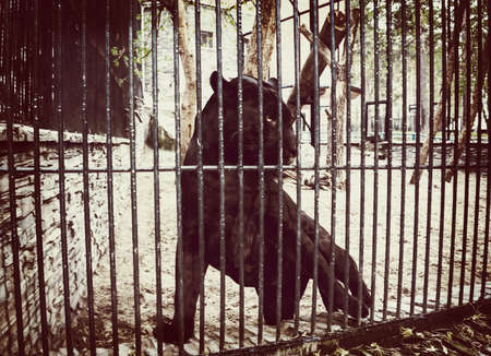 Black Jaguar in a cage of zoo. View of the black through the bars. Stock Photo