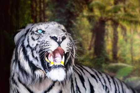 the white tiger growls. big canines. doff