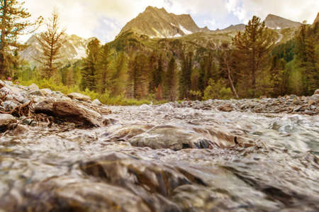 Beautiful Mountain River in Altai . Autumn. Current water. Tree on the stone. Stream water.