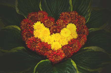 natural flower heart, made of Astra, paeony and corn flowers. on the background of green leaves