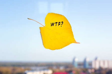 Autumn yellow fallen leaf leaf on the window on the background of the city. The inscription on the sheet WTF
