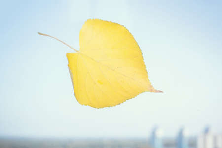 windows: Yellow leaf on a window on a city background blurred. the concept of autumn. Stock Photo