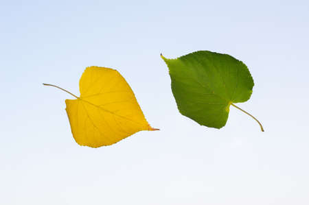 Autumn falling leaves on blue background. the concept of autumn. Stock Photo