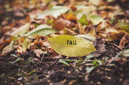windows: many yellow fallen leaves labeled fall. Fallen autumn leaves on the ground. The dreary autumn mood. Stock Photo