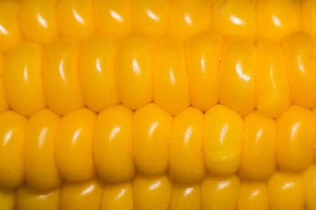 Sweet corn background. Orange boiled corn closeup macro.