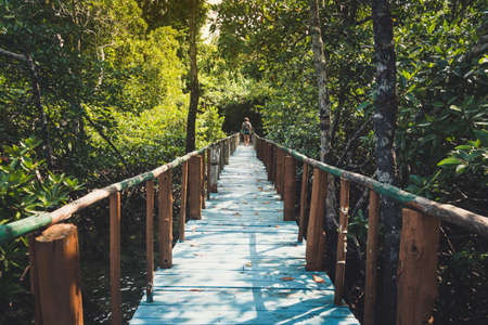 Wooden bridge lead to jungle in Thailand. The road in tropical jungles. The bridge over the swamp in the mangroves. impenetrable jungle