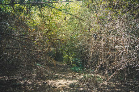 gray bush of dry thorns. Dry lichen. The path with the impenetrable wilds of the jungle