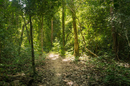 trail in the bamboo thickets tropical jungles of South East Asia. walking path among tall exotic trees in the jungle