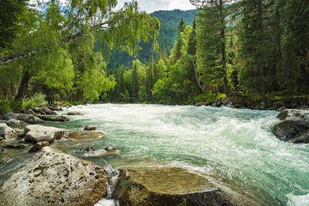 Mountain river Kucherla, forest, Altai, Russia. Fast water stream in mountain river with coniferous forest, Altai republic, Siberia, Russia. Beautiful scenery. Wildlife of the taiga.