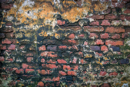 corner of a brick wall with moss mold. Dilapidated wall covered with mold and moss in an abandoned house.