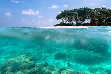 Over-under view of a tropical beach with lush tropical tree and sunlight on sandy seabed below water surface, Andaman and Nicobar Islands. Neil,Havelock. The concept of snorkeling and diving
