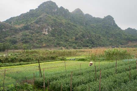 A woman works on a plant plantation. Heavy manual processing of the earth. Vietnam. Cat Ba island. Foto de archivo - 121442216