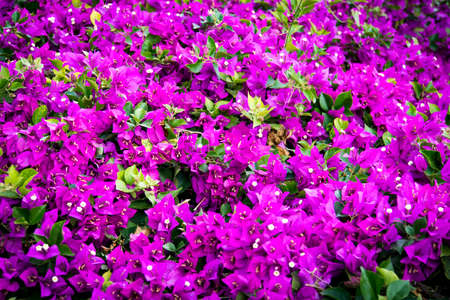 Shallow depth of flower bed photo, blossoms in focus, purple and lilac flowerbed. An abstract flowery spring and summer background. Close up of bright beautifully blooming mauve flowers. Banco de Imagens