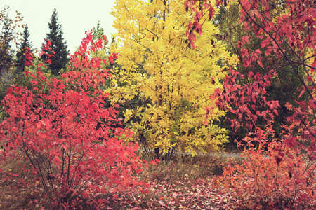 Autumn palette. National Arboretum in the Fall, colorful autumn. Indian summer. mellow autumn. golden fall.