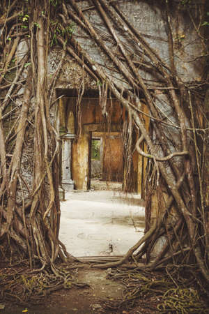 Ruin of abandoned building covered with roots on Ross Island. Andaman Islands, India. Abandoned ruins in the jungle